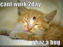 sick-cat